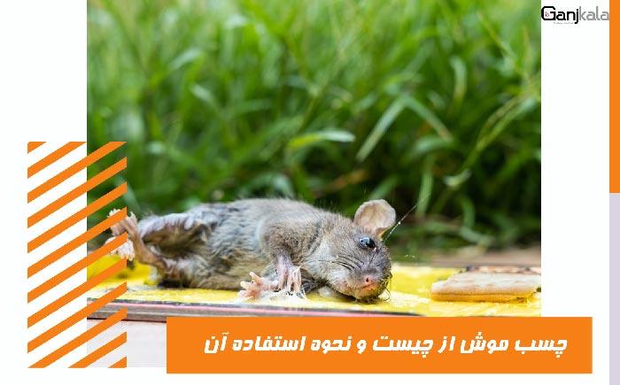 چسب-موش-چیست